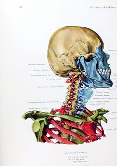 Pernkopf anatomia pdf
