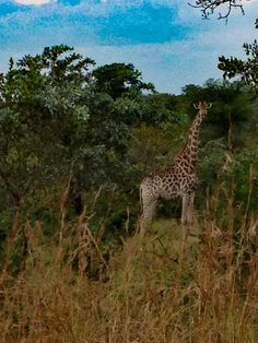 Parco nazionale Kruger South Africa April 14