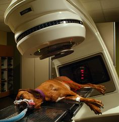 Linear Accelerator used to administer Radiation Treatment to dog with cancer at Upstate Veterinary Specialists