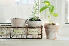 Craftberry Bush: On my window sill...chicken wire caddy