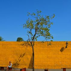 arbol pared amarillo