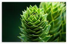 Spiral Plant wallpaper