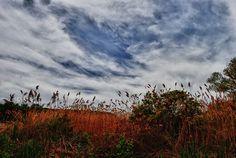 Clouds Above a Grassy Field