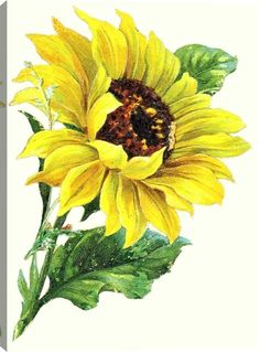 Victorian Yellow Sunflower Floral Canvas Wall Art Print by Unknown