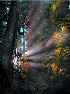 landscapes, scenery, trees, forests, sunlight