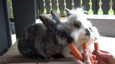 Raubtierfütterung - Gefräßige Kaninchenbande