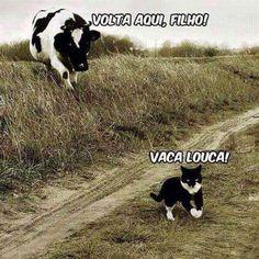 Vaca louca kkkkkkkkkkkkkk