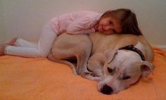 Why You Should Adopt a Less-Adoptable Pet...this could be my daughter and our pit! They cuddle all the time.