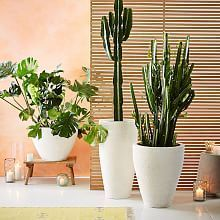https://www.westelm.com/products/iris-planter-chevron-stand-triple-d4437/?pkey=cplanters