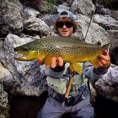 Brown Trout.For more fly fishing info follow and subscribe www.theflyreelguide.com Also check out the original pinners/creators site and support!