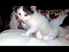 Bella and Rosa my sweet kittens - YouTube