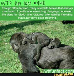 Wtf fun fact #4140