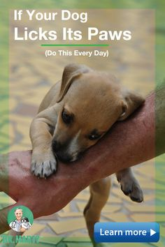 Plays with your heart strings, but does not make you stay for more. Cute Funny Animals, Cute Baby Animals, Animals And Pets, Baby Dogs, Pet Dogs, Cute Puppies, Dogs And Puppies, Dog Items, Dog Care