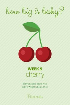 Your baby has graduated from embryo to fetus—and is now about the size of a cherry. The digestive tract and reproductive organs are formed, but it's still too early for even a skilled technician to tell whether you're having a boy or a girl. Baby Week By Week, 9 Weeks Pregnant, Baby Weeks, Weight Charts, Cherry Baby, Pregnancy Calculator, Nursing Mother, Bebe