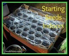 starting seeds indoors ** I like some of her pointers!