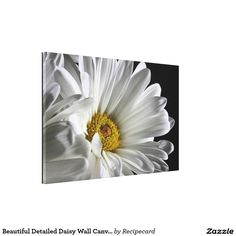 Beautiful Detailed Daisy Wall Canvas Stretched Canvas Prints