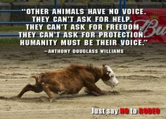ANIMAL ABUSE AT RODEOS IS NOT ENTERTAINMENT! It's another sick way for white trash to get off!