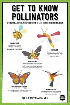 Plant Seeds: Protect Pollinators! Get to know Pollinators. | WholeFoodsMarket.com