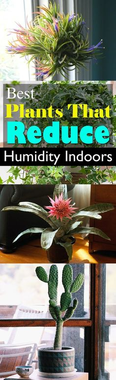 Cope with stickiness and extra moisture in the air by growing plants that reduce humidity indoors. They work. Check out! #floridagardening
