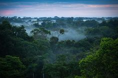 Hutan Amazon yang indah banget