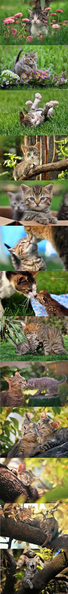 KITTEN photos by ZoranPhoto on DeviantArt #cat cats kitty kitten animal pet cute adorable nature