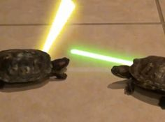 Teenage Mutant Jedi Turtles?  The Dueling Animal Video Of The Day!!!  ... see more at PetsLady.com ... The FUN site for Animal Lovers