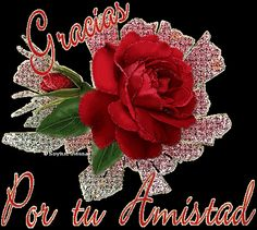 Clic para ver la Tarjetita ampliada Christmas Wreaths, Holiday Decor, Flowers, Friends, Friendship Images With Quotes, Jesus Pictures, Cell Phone Wallpapers, Amigos, Royal Icing Flowers