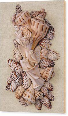 Seashell Wreath, Seashell Art, Seashell Crafts, Seashell Projects, Sand Projects, Shell Display, Shell Flowers, Shell Decorations, Sea Glass Crafts