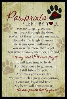 Sweet and heartbreaking....for animal lovers. ..dogs and cats in particular