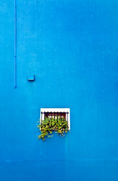 window box on blue by Linda Wride #fineartphotography