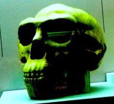 El crani dels nostres avantpassats.