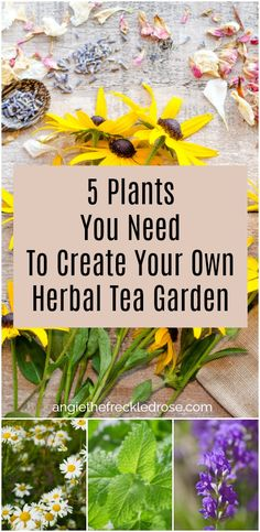 5 Plants You Need to Create Your Own Herbal Tea Garden | angiethefreckledrose.com