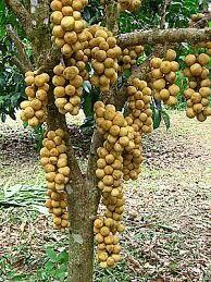 Fruit Plants, Fruit Trees, Variety Of Fruits, Fruits And Veggies, Fruits Photos, Yellow Fruit, Amazing Gifs, Exotic Fruit, Tropical