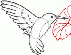 how to draw a hummingbird and flower step 6