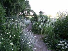 Till höger mattram, en låg viol, vidare efter gången vit mjölke. Vänster: Trifolium ochroleucum = Blekklöver, vit studentnejlika, kungsljus.