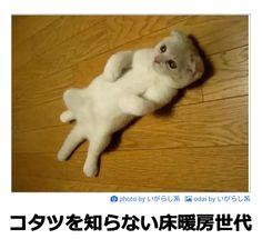 Tumblr: nekogin25:  コタツを知らない床暖房世代ボケて (bokete)