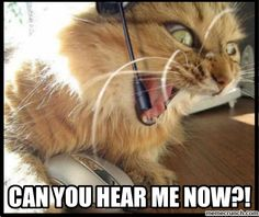 Angry Customer Service Cat