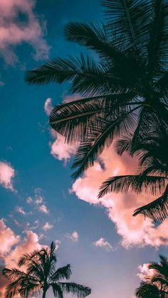 lisa aesthetic palme strand wolken hintergrundbild hintergrund feiertage tropisch insel fondecraniphone pal palme strand wolken hintergrundbild hintergrund feiertage tropisch insel fondecraniphone pal Lisa Janke blnlisaa w a l l p a p nbsp hellip Wallpaper Pastel, Sunset Wallpaper, Tree Wallpaper, Iphone Background Wallpaper, Aesthetic Pastel Wallpaper, Aesthetic Wallpapers, Tropical Wallpaper, Paradise Wallpaper, Forest Wallpaper