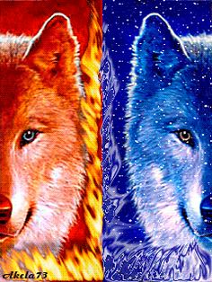 wolf_fy6lzlff.gif photo by AmandaLK-
