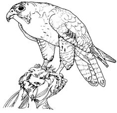 real detailed hawk coloring pages printable enjoy coloring
