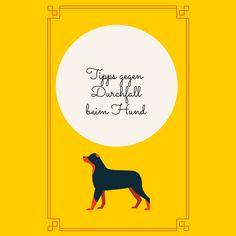 Durchfall beim Hund ist unangenehm für alle Beteiligten. Hier findest Du alle Infos die Dir und Deinem Hund helfen den Durchfall loszuwerden