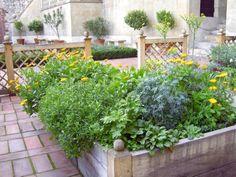 Rabaty skrzyniowe kipią bogactwem ziół i kwiatów. Rosną w nich m.in. nagietki, ruta, goździki i złocień maruna