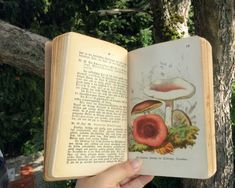 """Pastel Cottage Witch — shroomlings: Old mushroom book: """"Giftige und. Nature Aesthetic, Witch Aesthetic, Book Aesthetic, Aesthetic Pictures, Aesthetic Green, Disney Aesthetic, Aesthetic Pastel, Aesthetic Fashion, Lizzie Hearts"""
