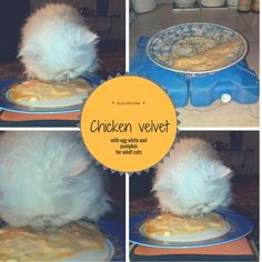 Chicken velvet with egg white and pumpkin for adult cats - http://elicats.com/recipe/chicken-velvet-with-egg-white-and-pumpkin-for-adult-cats/ Recipe with chicken, egg white and PUMPKIN for an adult cat, about 2/3 Meals. It can be kept in the fridge for about two days.