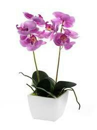potted live light pinky-purple orchids