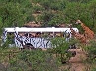African Bush Safari at Arizona's Best Wildlife Park - Sedona