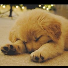 Cute sleeping puppy, I'm getting one soon, just need to decide on breed!