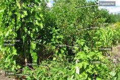 Une forêt nourricière dans sa cour: article de LaPresse; suggestions de Wen Rolland. Guilde de plantes: autrement dit des regroupements végétaux qui reproduisent les processus naturels essentiels.