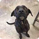 Adopt A Pet :: JASPER - Texas City, TX