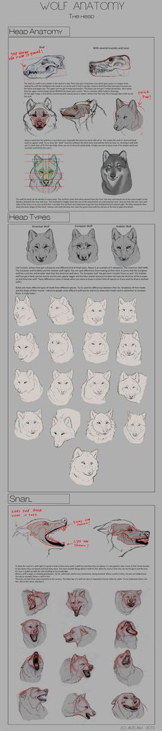 So, people keep requesting an anatomy tutorial. Here it is: This is probably the anatomy mistake I see from people trying to draw cats. Animal Anatomy - Cats Part 1 Drawing Lessons, Drawing Techniques, Drawing Tips, Drawing Ideas, Animal Sketches, Animal Drawings, Anatomy Reference, Art Reference, Anatomy Tutorial